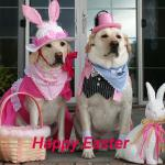 Mollie & Marley in their Easter bandanas